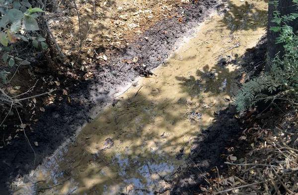 جهاد کشاورزی تهران خواستار پیگیری آلودگی نفتی زمینهای باقرشهر شد
