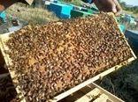رشد تولید عسل در قائم شهر