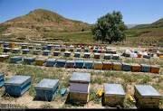 زنبورستانهای استان سمنان هم امسال سرشماری نمیشود