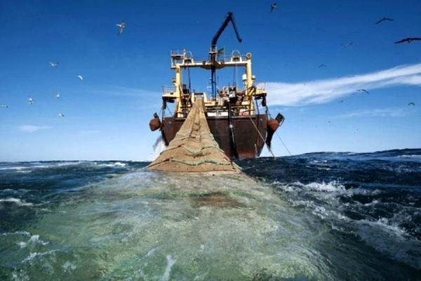 صید ۲۶ هزار و ۵۴۸ تُن فانوس ماهی در آبهای دریای عمان