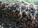کشف یک تن چوب جنگلی بلوط قاچاق در شهرستان اردل