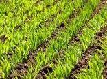کاشت بیش از 4 هزار هکتار گندم در خرم بید
