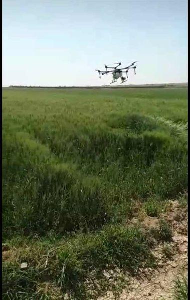 ۵۰۰ هکتار مزرعه گندم شهرستان ری توسط پهباد سمپاشی شد