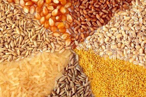 تأمین خوراک دام منوط به همکاری همه دستگاههای ذیربط است