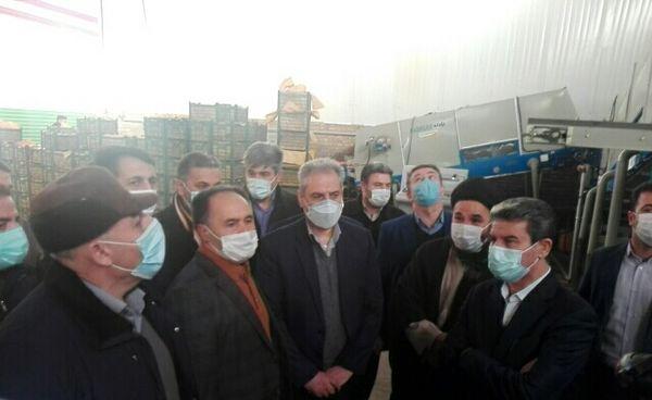 بازدید از کارخانه سورت و بستهبندی محصولات کشاورزی در شهرستان ارومیه