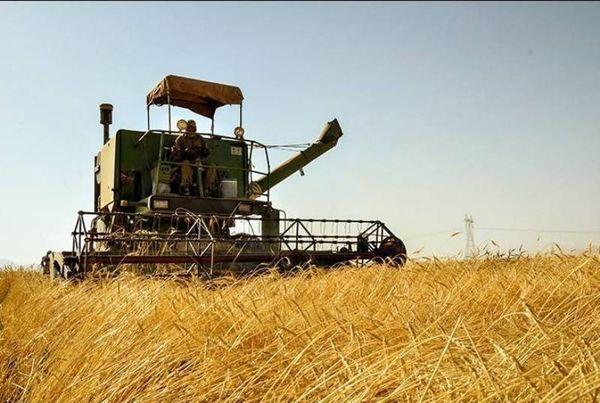 پیشبینی برداشت ۴۰ هزار تن غلات مازاد از مزارع شهرستان چرداول