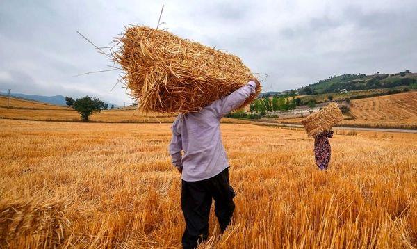 خرید گندم در چهارمحال و بختیاری از مرز 28 هزار تن گذشت