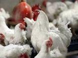 جلوگیری از فروش مرغ زنده در شهرستان ملکشاهی