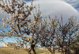 سرمازدگی 100میلیارد ریال به باغات شهرستان سامان خسارت زد