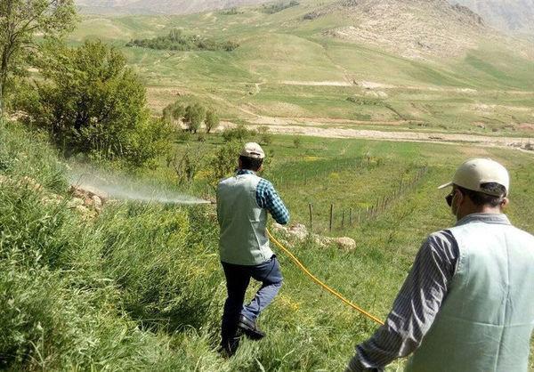 قلع و قمع ملخهای صحرایی در ۳۰ هزار و ۲۰۰ هکتار اراضی استان بوشهر