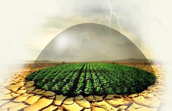 نیمی از اراضی زراعی چهارمحال و بختیاری تحت بیمه محصولات کشاورزی قرار گرفت
