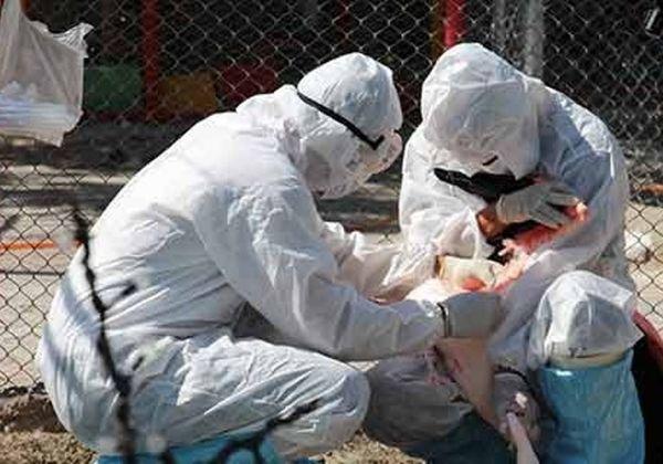 پایش دوباره آنفلوآنزای پرندگان از ابتدای مهر
