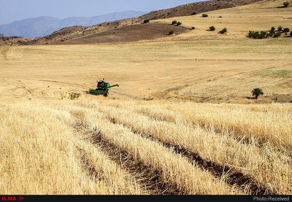تهیه الگوی کشت دیم در 230 هزار هکتار از اراضی کشاورزی استان قزوین