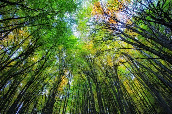 حیات جنگلهای هیرکانی مدیریت نمیخواهد