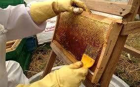 افزایش 15تنی تولید عسل در شهرستان دماوند