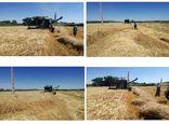 تولید 2760 تن جو توسط کشاورزان شهرستان خداآفرین