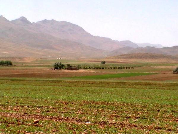 بیش از 186 هزار هکتار محصول گندم و جو در سال زراعی جاری در خراسان شمالی