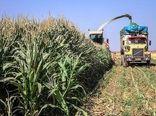 برداشت بالغ بر 3 هزار تن ذرت علوفهای از مزارع شهرستان بیرجند