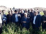 ایلام ظرفیت صادرات محصولات کشاورزی را دارد