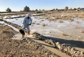 آبگیری مزارع کشاورزان ازطرح 46 هزارهکتاری انتقال آب بالوله به دشت سیستان آغازشد