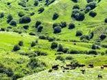 فرمانده حفاظت منابع طبیعی خراسان شمالی در زمینه تخریب مراتع هشدار داد