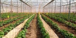 صدور بیش از 13 هزار فقره پروانه فعالیت برای واحدهای تولیدی کشاورزی در میاندوآب