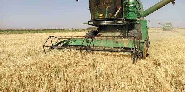 برداشت مکانیزه گندم در شهرستان نایین آغاز شد