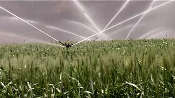 اجرای شبکه آبیاری نوین در نیمی از اراضی کشاورزی و باغی فریدونشهر