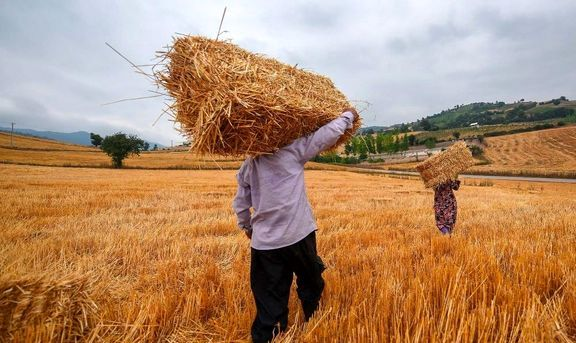 خرید حمایتی گندم از مزر ۲میلیون ۵۰۰ هزار تن گذشت