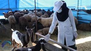 مشکلات تسهیلات مرغداران در شهرستان شهربابک مرتفع میشود