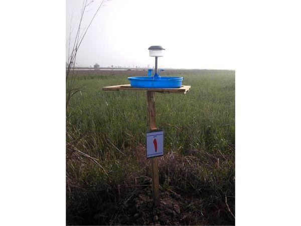 اجرای پروژه پیش آگاهی کرم ساقه خوار برنج در هزار هکتار شالیزار آمل