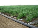 کاهش ۲هزار هکتاری سطح زیر کشت گندم در یزد