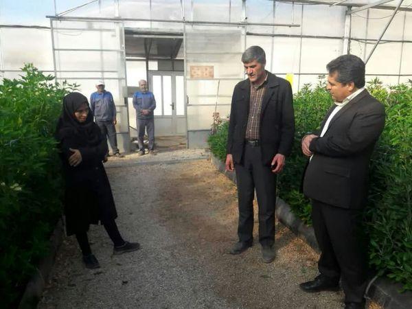 توسعه کشتهای متراکم در شهرستان اردل