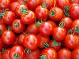 این سازمان مسئولیتی در قبال کشت گوجه فرنگی خارج از الگوی استان ندارد