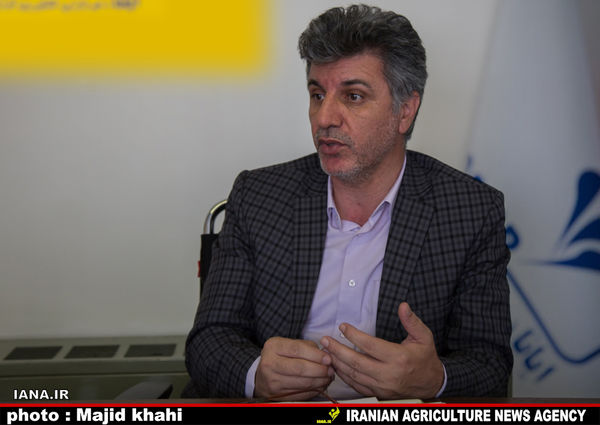 افزایش کشت پنبه درگلستان، کاهش در اصفهان