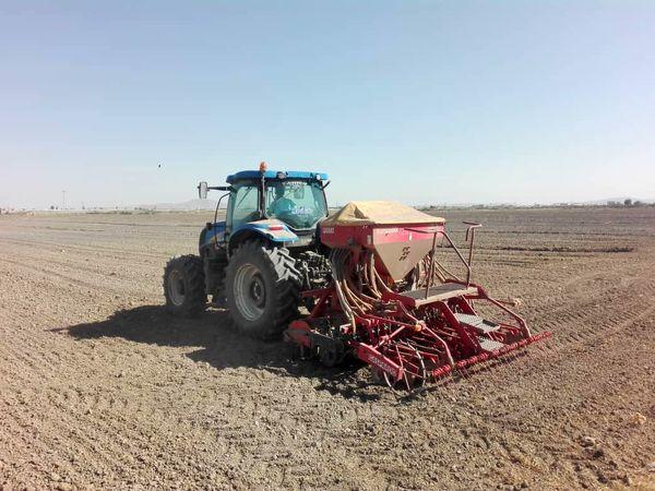 ۱۲۲۰ هکتار از اراضی زراعی شهرستان نقده زیر کشت دانه روغنی کلزا رفت