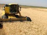 ۲۱۷ میلیارد تومان در خرید تضمینی گندم به کشاورزان بوشهری پرداخت شد