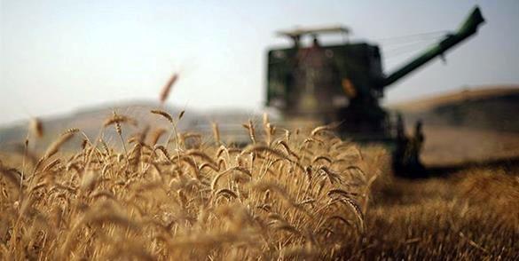 خرید تضمینی بیش از 4.4 میلیون تن گندم از کشاورزان