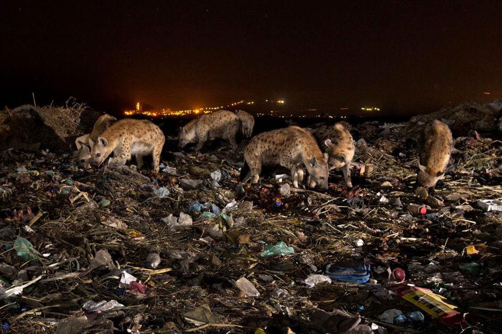 آلودگی پلاستیک