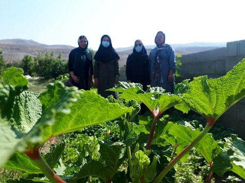 ایجاد باغچههای سلامت در فیروزآباد