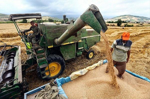 خرید گندم مازاد بر مصرف کشاورزان سیستان و بلوچستان به 22 هزار تن رسید