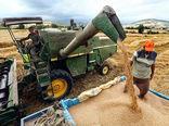 تولید یکمیلیون و ۴۰۰ هزار تن گندم در گلستان