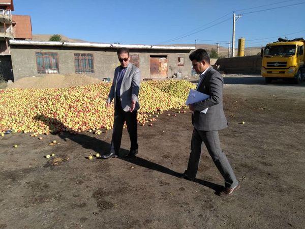 راه اندازی ۳ مرکز خرید سیب صنعتی در اشنویه