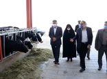 بازدید از زنجیره تولید دام مدرن در شهرستان آبیک