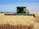 تاکنون ۱۶۸ هزار تُن گندم در اصفهان برداشت شده است