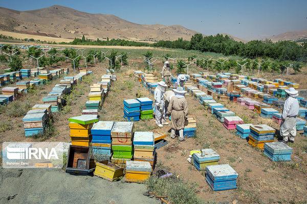بیش از ۲ هزار طرح اشتغال اجتماع محور کشاورزی در کردستان اجرا شد