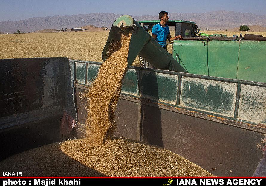 پرداخت دو مرحلهای امکان کاشت دوم گندم را از بین میبرد