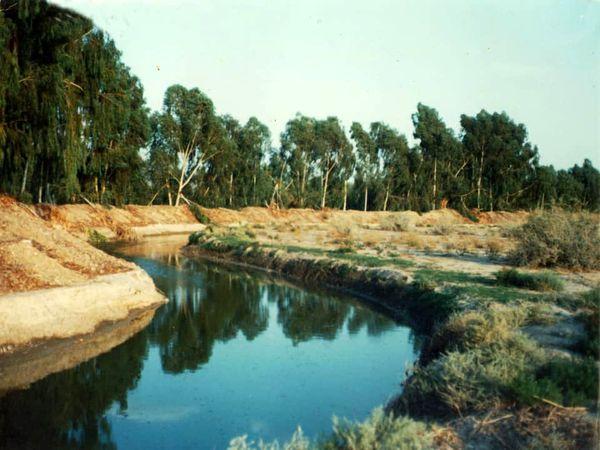 پاسخ به دغدغه های دوستداران محیط زیست در خصوص قطع درختان در گربایگان
