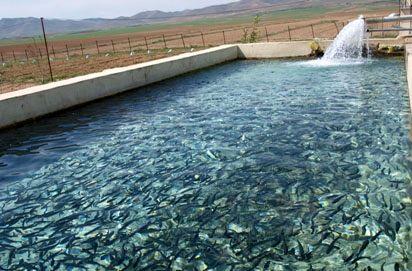پرورش آبزیان در بزرگترین استخر ذخیره آب کشاورزی کشور
