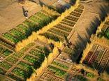 باغچه سبزیجات در مالزی